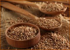 Buckwheat groats in bulk / Buckwheat grain