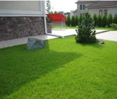 Seeds of lawn herbs of the Grass lawn Bentgrass