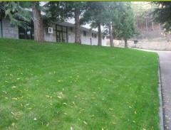 Herbs lawn universal