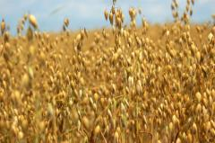 Oats fodder carriage norms