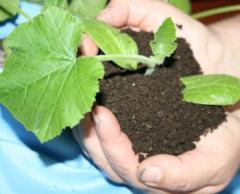 Биогумус-лучшее органическое удобрение,продукт