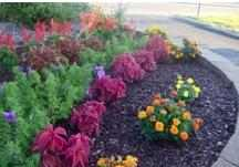 Mulch decorative for gardening