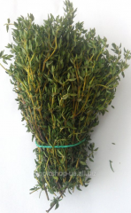 Thyme - Thyme