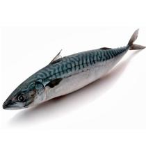 Mackerel 400-600 headless