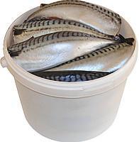 Mackerel solenaya400-600 with head