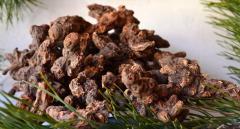 Kalgan root (Cossack ginseng)