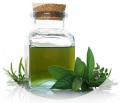 Essential oil of a peppermint of 55% of menthol of