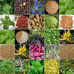 Herbs of spice and spice natural