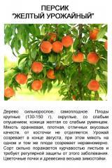 Персик Желтый Урожайный, саженец 4-х летка, ком