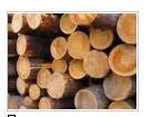 Round wood (round timber)