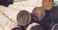 Колья,  шесты,  подпорки деревянные