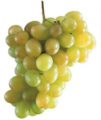 The concentrated juice of white grapes of 65%