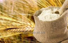 Wheat flour of the first grade