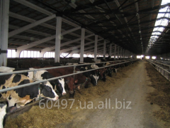 Cowsheds, design, reconstruction and construction