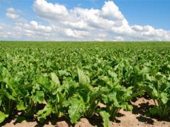 Удобрения для почвенного внесения