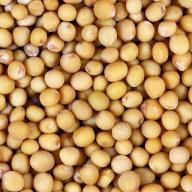 Seeds of mustard, mustard seeds