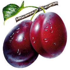 The plums frozen
