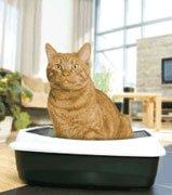 Силикагелевые наполнители для кошачьих туалетов