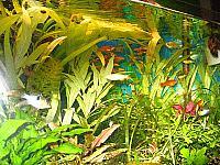 акваримные растения по доступным ценам с