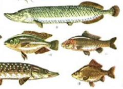 Рыба охлаждённая пресноводная в ассортименте