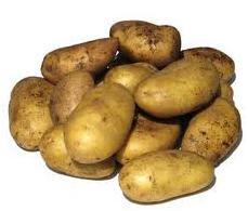 Картофель оптом на Экспорт