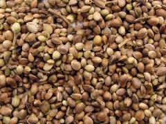 Семена. Торговля семенным материалом