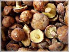The butter mushrooms frozen