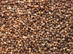Grade buckwheat seeds Grain