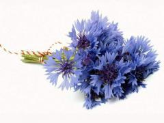 Color to order a centaurea in Ukraine