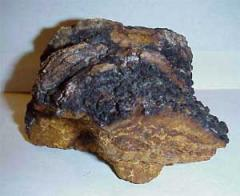 The Chaga is birch