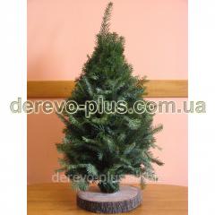 Новогодняя елка (ветки ели,  вязанные)...