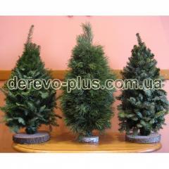 Новогодняя елка  (хвойные ветки,  вязанные)