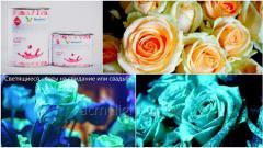 Светящаяся краска для цветов Acmelight Flower