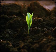 Грунт растительный
