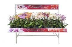 Богемная орхидея Фалеонопсис Bohemian Orchids