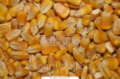 Кукуруза фуражная на экспорт