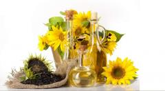 Sunflower oil of a cold extraction