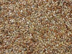 Семена расторопши (Silybym MARIANUM) на экспорт
