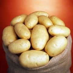 Семенной картофель класа Е,А