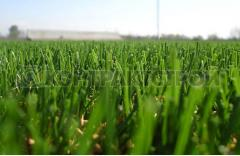 Artificial grass for the football fields Limonta