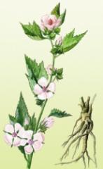 Altya medicinal (root)