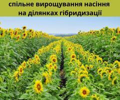 Совместные участки размножения семян с ООО