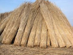 Cane in sheaves