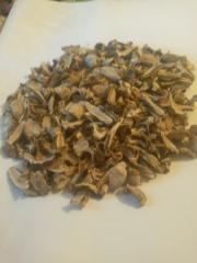 Mushroom veselka