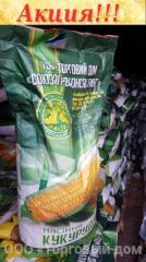 Хибридна царевица