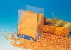 Gluten corn