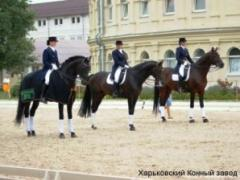 "Horses of breed ""Ukrainian riding"