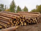 Лес строительный (ель)