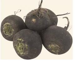 Семена редьки: зимней черной