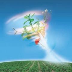 Гербіцид Консультант, Китай, 20 л/кукурудза